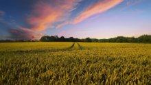 Artificialisation des sols : quels enjeux urbanistiques ?